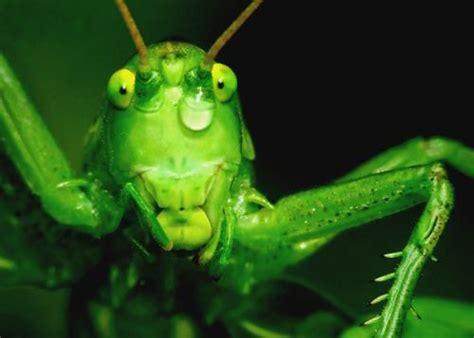 casa infestata da pulci affittare una casa infestata da insetti ne risponde il