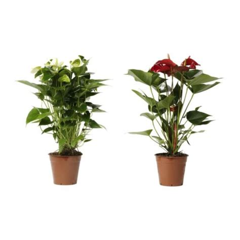 ikea plants candles picture frames plants plant pots vases clocks ikea