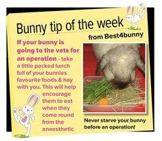 Must For The Week The House Bunny by Rabbit Care On Rabbit Toys Rabbit Hutches And