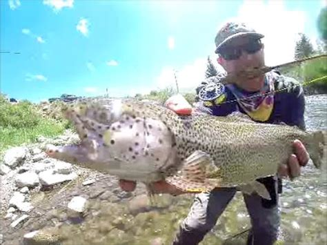 fly fishing colorado s blue blue river silverthorne colorado fly fishing