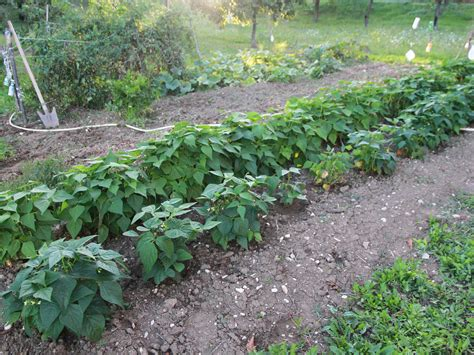Soil Preparation For Vegetable Garden How To Prepare The Soil For A Vegetable Garden 8 Steps