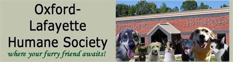25 best ideas about humane society on animal