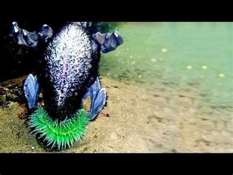 anemone eating bird sea anemone eats bird youtube
