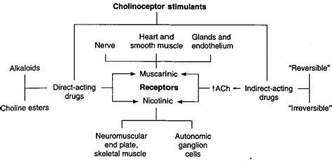 Muscarinic Antagonist Also Search For Muscarinic Agonists Cholinergic Agonists Muscarinic