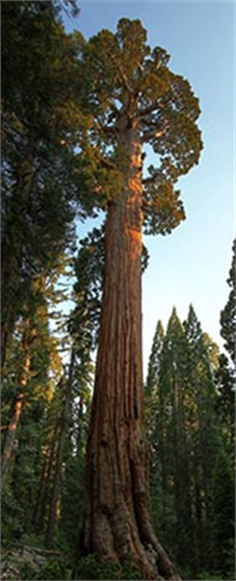general grant tree sequoia kings canyon national