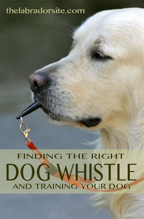 best whistle whistles should you buy which is best how to