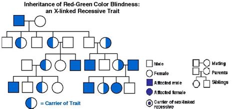 color blindness genetics color blindness genetics by luke