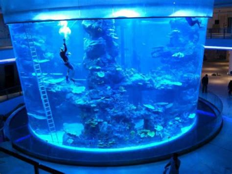 morocco mall les poissons du plus grand aquarium du maroc morts suite 224 une 171 erreur