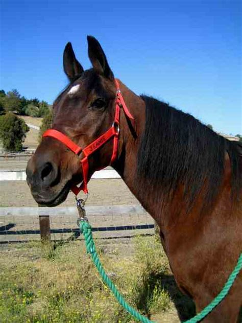 farewell to the horses when and how to say goodbye to your horse slo horse news