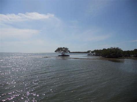 everglades island boat tours everglades city fl 10000 islands tour picture of everglades national park