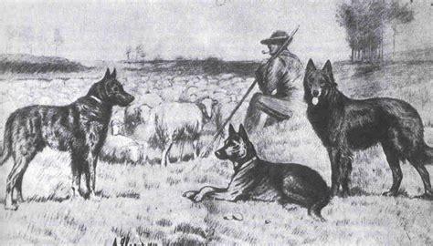 origin of dogs bsca