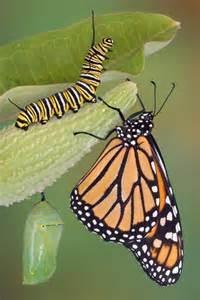 187 butterflies choosing comedy