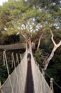 Canopy Walkways by Amazon Rainforest Canopy Walkway