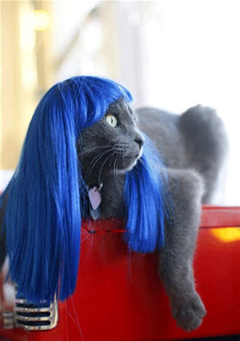 cat wig wigs the green