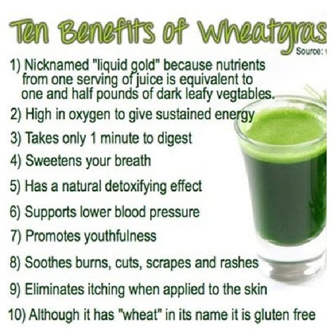 Wheatgrass Detox Side Effects by 1000 Ideas About Wheat Grass Benefits On
