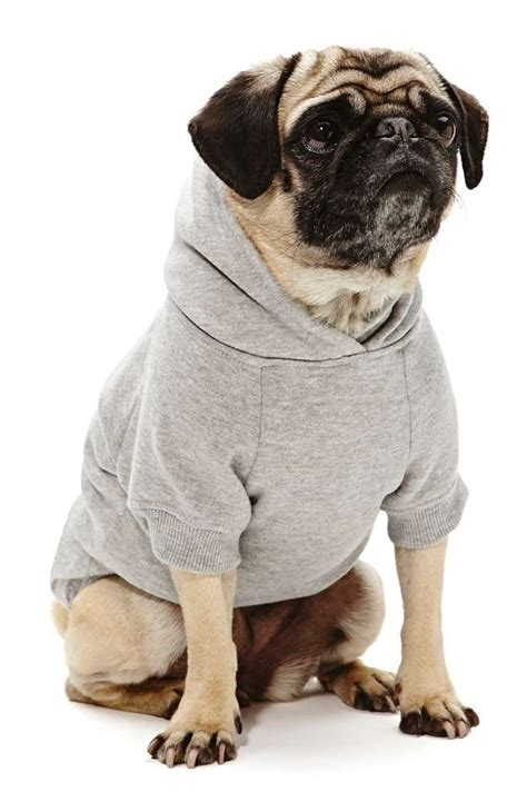 pug hoodie sup hoodie gal who knew ga carried clothes 28 pugs