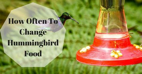 how often to change hummingbird food useful tips for you