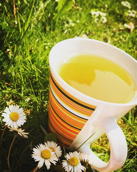 How Much Do You Lose On A Tea Detox by How Much Green Tea Should You Drink To Lose Weight