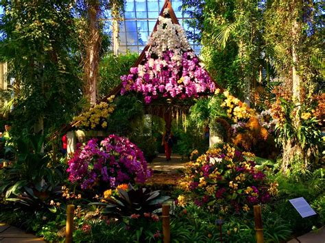 Calendar Highlight The New York Botanical Garden Orchid Botanical Garden Show