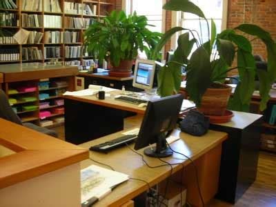 Plants For Office Desk by Health Benefits Of Office Plants