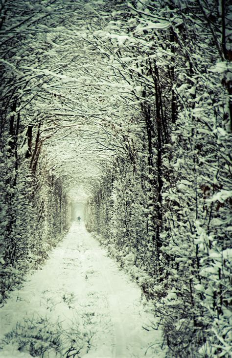 images of love in winter tunnel of love in ukraine 20 unbelievably beautiful places