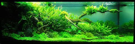 natural design aquarium adrie baumann and aquascaping aqua rebell
