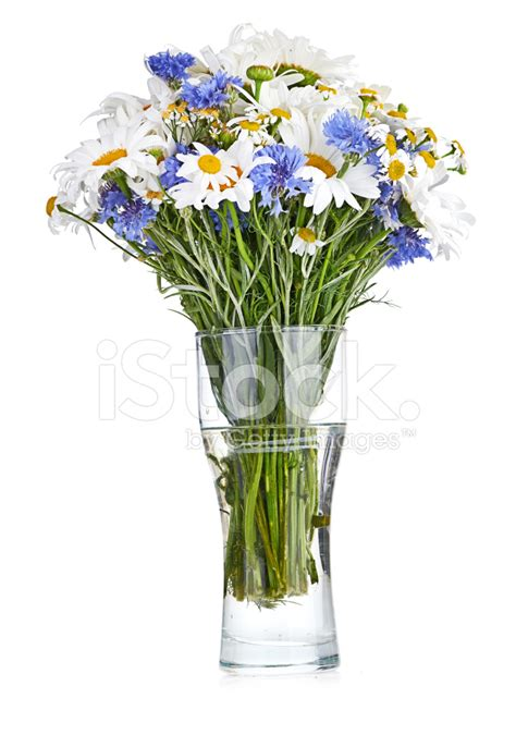 beautiful bouquet of daisies in vase stock photos