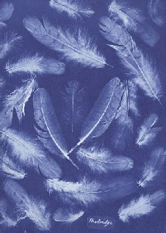 history of cyanotypes from blueprints on fabric