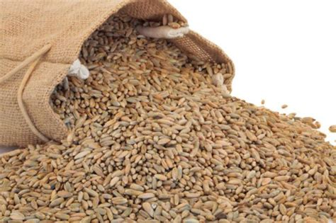 whole grains near me organic rye grain from real foods buy bulk wholesale
