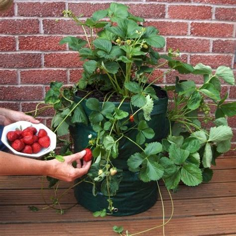 Raised Strawberry Planters by Strawberry Planter