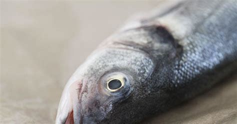 Will You Eat Fish With The Heads Still On fish eaters can you eat fish with the heads still on them