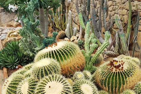 giardino esotico giardino esotico pallanca