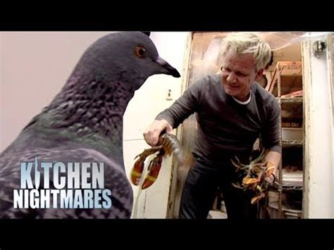 Ramsay Finds A Pigeon and More Dead Lobster in the Kitchen