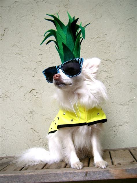 pineapple for dogs 17 best images about costumes on costumes pineapple costume and