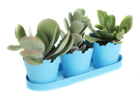 succulent house how to propagate succulents hgtv