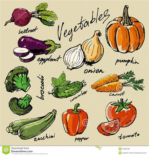 Drawing Vegetables by Vegetables Stock Vector Illustration Of
