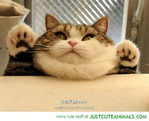 1000 images about kitten rampage on pinterest fat cats