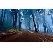 Nature Landscape Mist Road Forest Portugal Trees