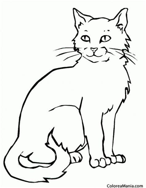 imagenes para colorear gato colorear gato pelo largo animales domsticos dibujo para