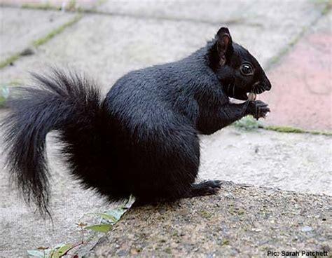 gc2vjgw black squirrel (traditional cache) in ohio, united