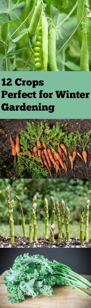 vegetable gardening gardening steps
