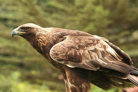 b3 the baby eagle based on a true story books красная книга 187 raax ru все обо всем