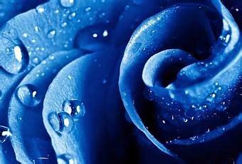 queneau i fiori i fiori di raymond queneau recensione paperblog