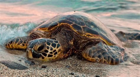 imagenes de libres y tortugas foto de una tortuga marina im 225 genes y fotos