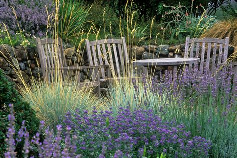 ornamental grasses capture attention with easy beauty easy care san francisco chronicle