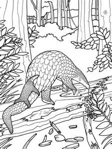 Wild Animals Images For Colouring L L