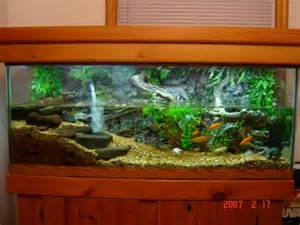 turtle tank 75 gallon gallery of aquariums terrariums by aqua terra habitats 2017 fish