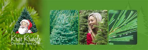 kris kringle trees web site name