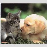 Kittens And Puppies Playing Together | Funny and Cute Cats Gallery