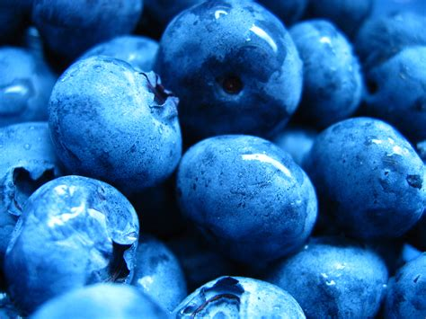 wallpaper blue food the power of blueberries featured in today s dietician